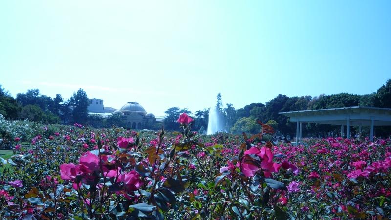 Exposition park beauty.